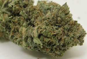 AK-47 – Hybrid | Buy Marijuana Online | Buy Weed