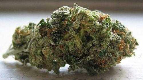 Hybrid | Buy Marijuana Online | Buy Weed online | Entirecannabis