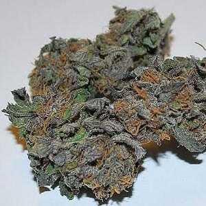 Death Star – Indica | Buy Marijuana Online | Buy Weed