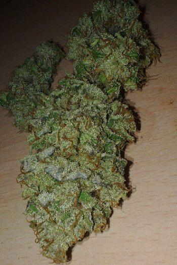 Lemon Haze – Sativa | Buy Marijuana Online | Buy Weed