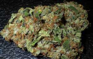 Skywalker – Indica | Buy Marijuana Online | Buy Weed