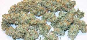 Super Lemon Haze – Sativa | Buy Marijuana Online | Buy Weed