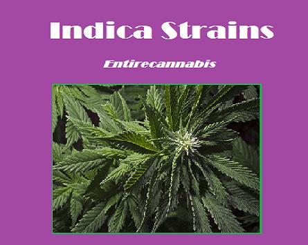 Indica Strains at Entirecannabis | Buy Marijuana online