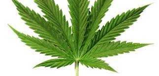 Buy weed online in Europe, Buy cannabis oil, entirecannabis